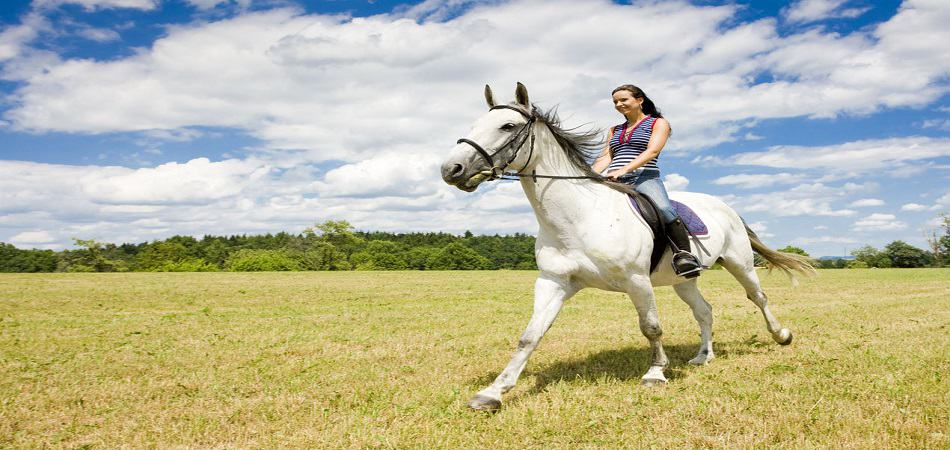 Прогулка на коннях
